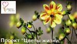 b_150_100_16777215_00_images_zagruzki_kartinki-dlya-novostej_chveti_zizni.jpg